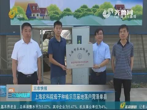 【三农快报】上海农科院茄子种植示范基地落户菏泽单县