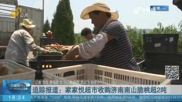 【桃子熟了】追踪报道:家家悦超市收购济南南山脆桃超2吨