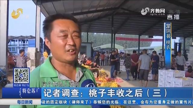 记者调查:桃子丰收之后(三)
