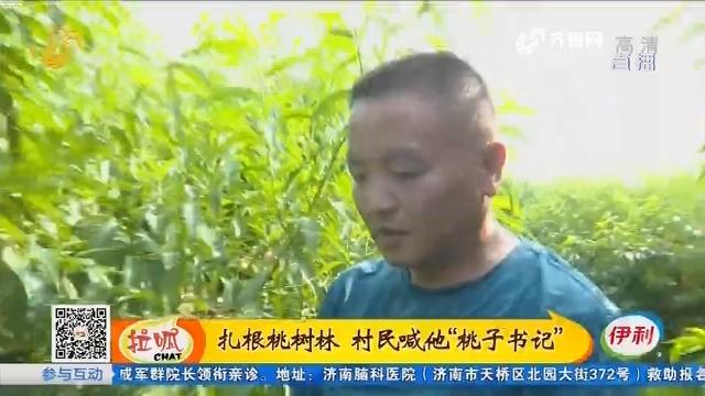 """泰安:扎根桃树林 村民喊他""""桃子书记"""""""