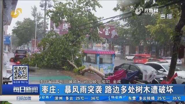 枣庄:暴风雨突袭 路边多处树木遭破坏