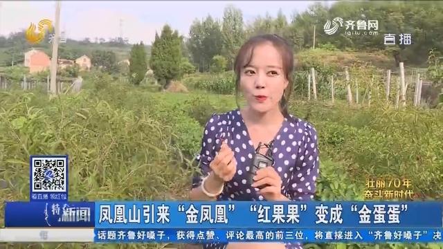 """济南:凤凰山引来""""金凤凰""""""""红果果""""变成""""金蛋蛋"""""""