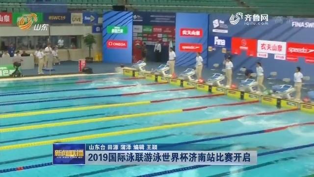 2019国际泳联游泳世界杯济南站比赛开启