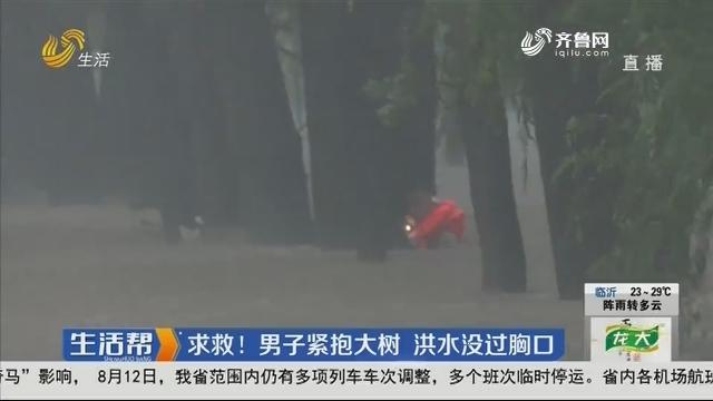 青州:求救!男子紧抱大树 洪水没过胸口