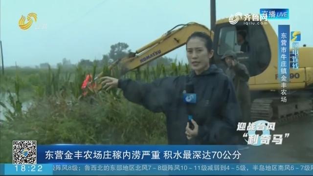【闪电连线】东营金丰农场庄稼内涝严重 积水最深达70公分