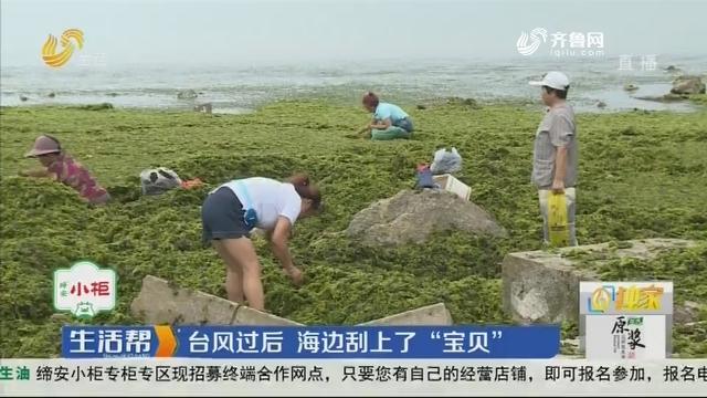 """【独家】烟台:台风过后 海边刮上了""""宝贝"""""""