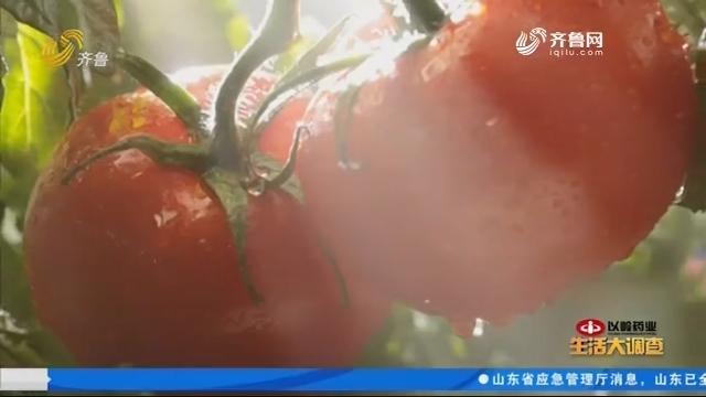 """2019年08月14日《生活大调查》:食物中存在""""天然防晒霜""""?"""
