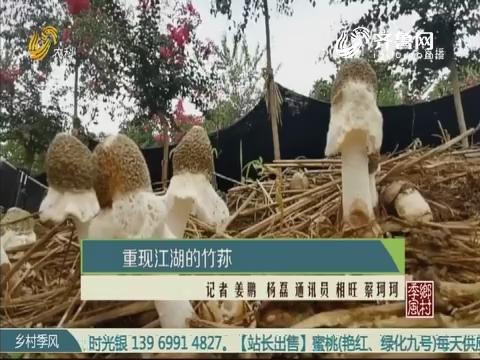 重现江湖的竹荪