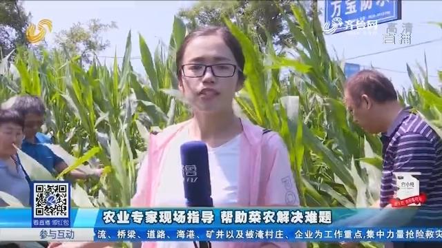 寿光:农业专家现场指导 帮助菜农解决难题