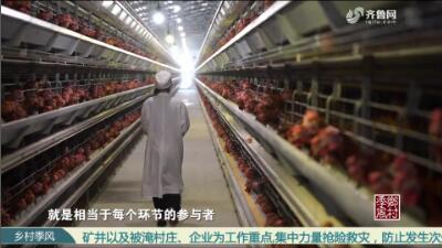 """【山东蛋品联盟""""勇闯上海滩""""(四)】做好""""蛋道追溯"""",打造优质蛋品"""
