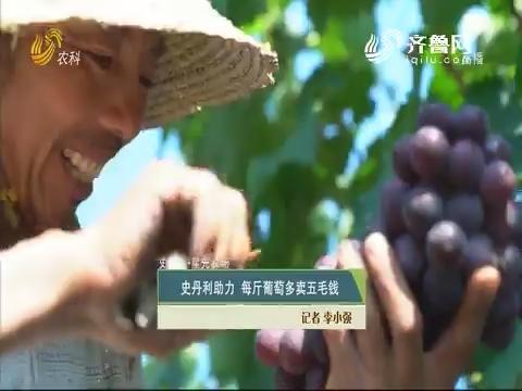 【史丹利·星光农场】史丹利助力 每斤葡萄多卖五毛钱