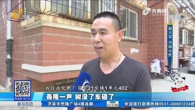 济南:轰隆一声 树没了车砸了!