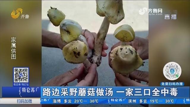 淄博:路边采野蘑菇做汤 一家三口全中毒