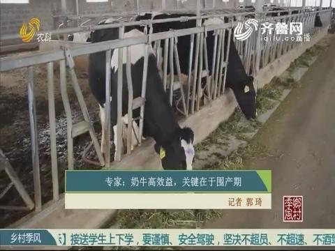 专家:奶牛高效益 关键在于围产期