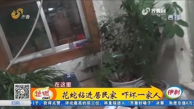 梁山:花蛇钻进居民家 吓坏一家人