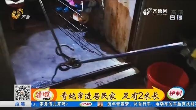 济宁:青蛇窜进居民家 足有2米长