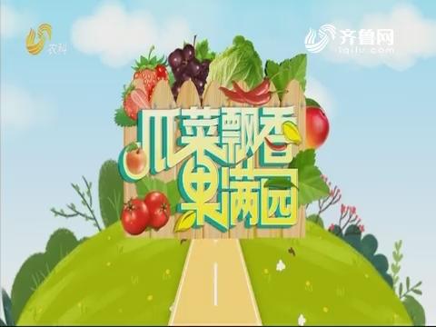 2019年08月29日《亲土种植·瓜菜飘香果满园》完整版