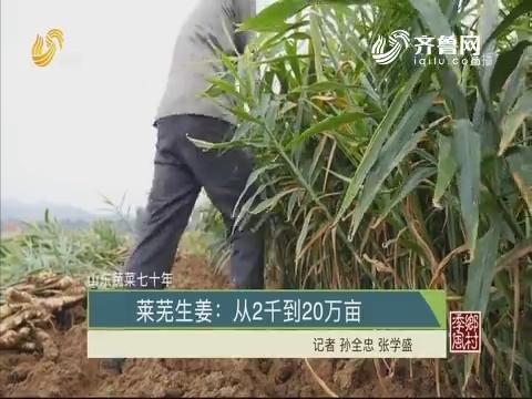 【山东蔬菜七十年】莱芜生姜:从2千到20万亩