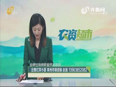 【金牌经销商联盟供求信息】出售红芽小姜 莱州市驿道镇
