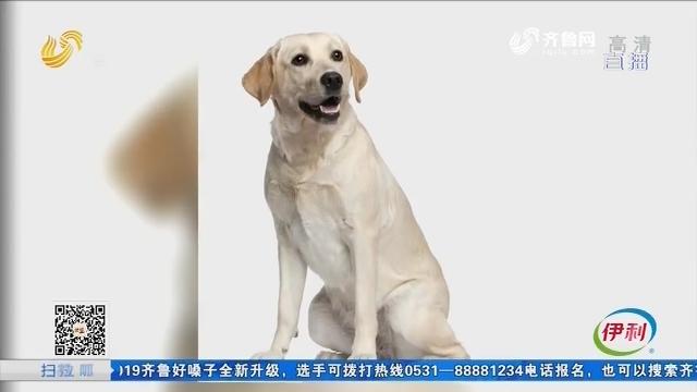 淄博:害怕回家 被同一只狗咬伤三次