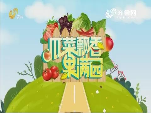 2019年08月30日《亲土种植•瓜菜飘香果满园》完整版