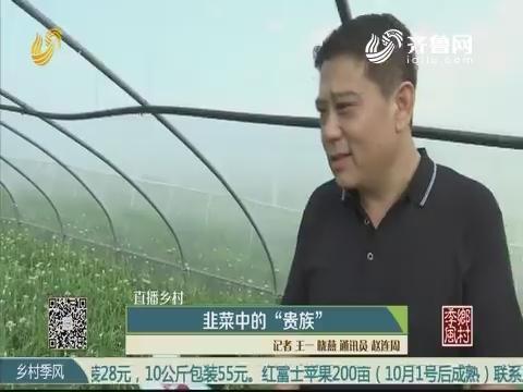 """【直播乡村】韭菜中的""""贵族"""""""