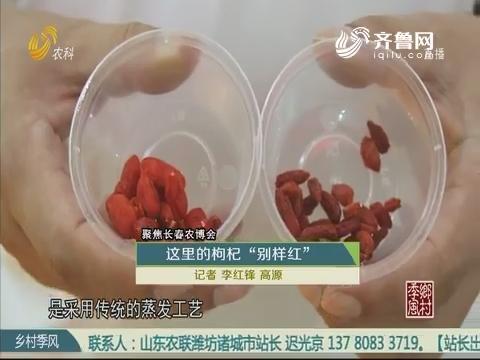"""【聚焦长春农博会】这里的枸杞 """"别样红"""""""