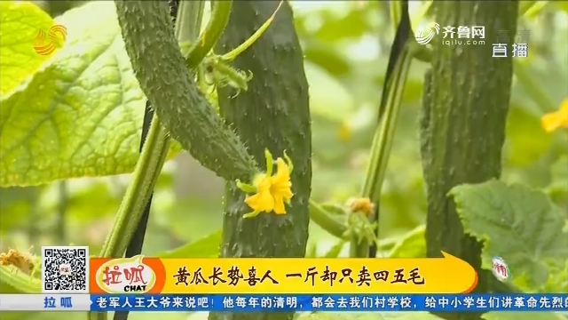莘县:黄瓜长势喜人 一斤却只卖四五毛