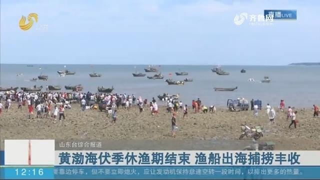 黄渤海伏季休渔期结束 渔船出海捕捞丰收