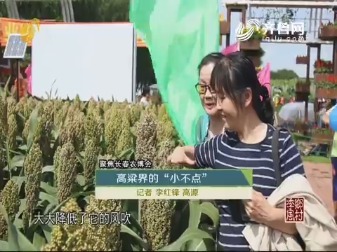 """【聚焦长春农博会】高粱界的""""小不点"""""""