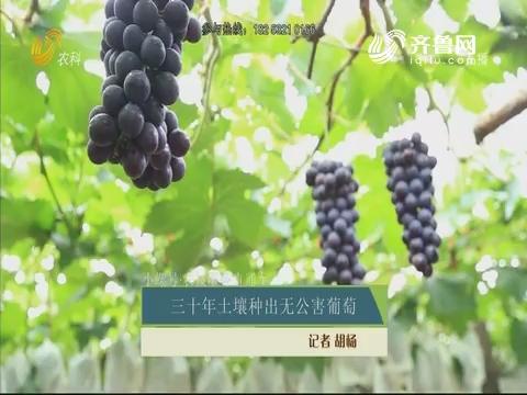 【小螺号·农技服务直通车】三十年土壤种出无公害葡萄