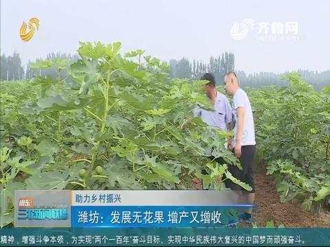 【助力乡村振兴】潍坊:发展无花果 增产又增收