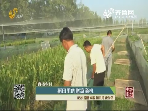 【直播乡村】稻田里的财富商机