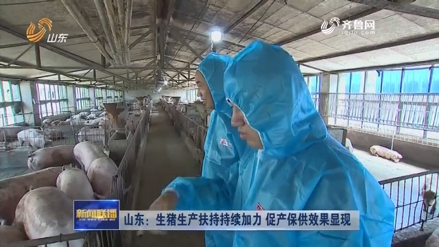 山东:生猪生产扶持持续加力 促产保供效果显现