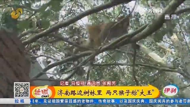 """济南路边树林里 两只猴子称""""大王"""""""