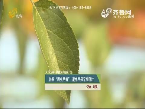 """【天下五谷·果蔬保姆在行动】防控""""两虫两病""""避免苹果早期落叶"""