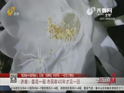 【我是新中国同龄人】济南:昙花一现 市民称40年才见一回