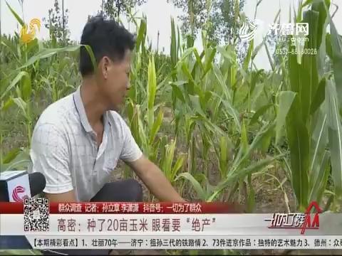 """【群众调查】高密:种了20亩玉米 眼看要""""绝产"""""""