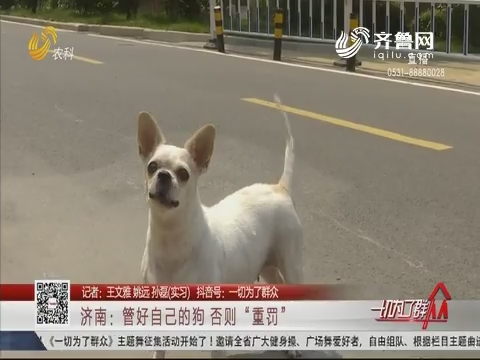"""济南:管好自己的狗 否则""""重罚"""""""