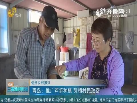 【促进乡村振兴】青岛:推广芦笋种植 引领村民致富