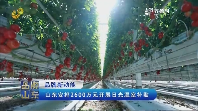 【品牌新动能】山东安排2600万元开展日光温室补贴