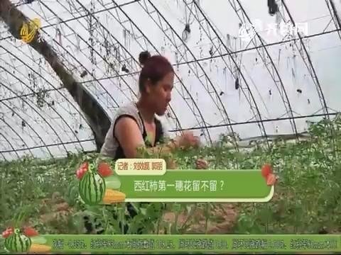【农技一点通】西红柿第一穗花留不留?
