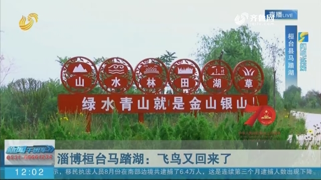 【70年 我们这里不一样】闪电连线:淄博桓台马踏湖:飞鸟又回来了