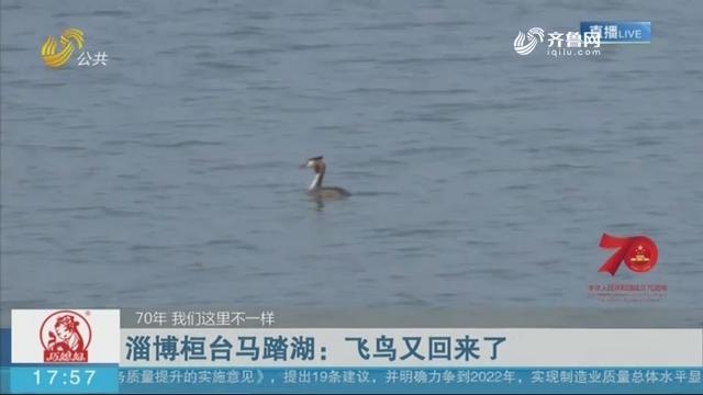【70年 我们这里不一样】淄博桓台马踏湖:飞鸟又回来了