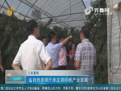 【三农要闻】省自然资源厅枣庄调研桃产业发展