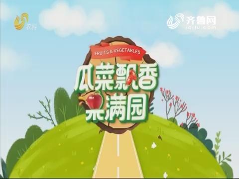 2019年09月11日《亲土种植·瓜菜飘香果满园》完整版