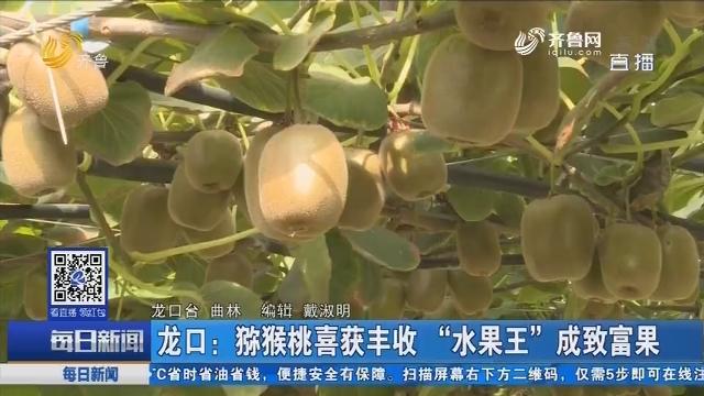 """龙口:猕猴桃喜获丰收 """"水果王""""成致富果"""