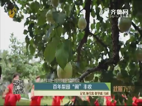 """【壮丽70年 共享丰收】百年梨园 """"闹""""丰收"""