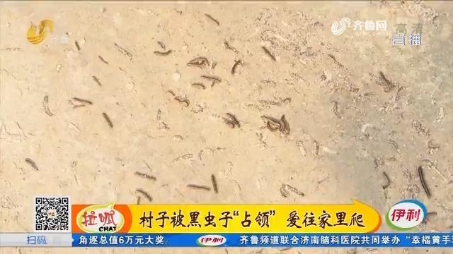 """济南:村子被黑虫子""""占领"""" 爱往家里爬"""
