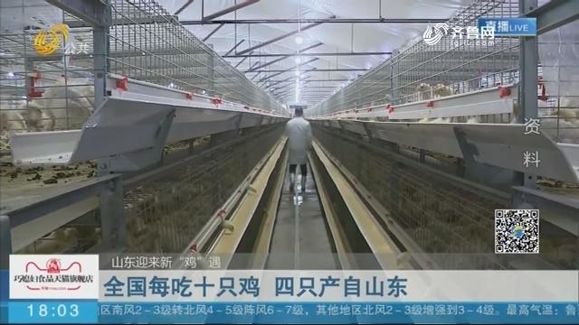 """【山东迎来新""""鸡""""遇】全国每吃十只鸡 四只产自山东"""